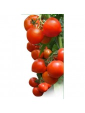 Хитомакс F1 - томат индетерминантный, 100 семян, KITANO
