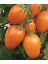 Стеша F1 - томат, 50 гр, индетерминантный