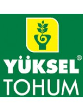 132-111 Сливка F1 - томат индетерминантный, 500 семян, Yuksel Seed (Юксел Сид) Турция