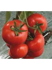 Ивет F1 - томат полудетерминантный, 500 семян, Syngenta (Сингента), Голландия