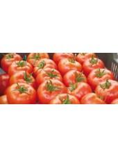 Силует F1 - томат полудетерминантный, 500 семян, Syngenta (Сингента), Голландия
